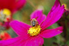Free Bee Stock Photos - 3145833