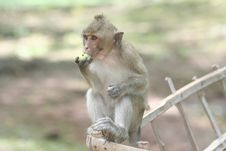 Free Monkey Stock Photography - 3148672