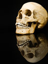 Free Human Skull With Mirror Image  On Black Stock Image - 31405221
