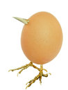 Free Chicken Egg As Bird With Beak And Legs Isolated On White Royalty Free Stock Photography - 31405337