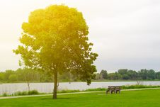 Single Tree In The Park Stock Images