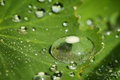 Free Closeup Of A Waterdrops On A Leaf Royalty Free Stock Images - 31416279