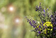 Free Spring Flower Background Royalty Free Stock Images - 31410249