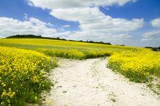 Free Chalk Path And Farmland Royalty Free Stock Photography - 31411327