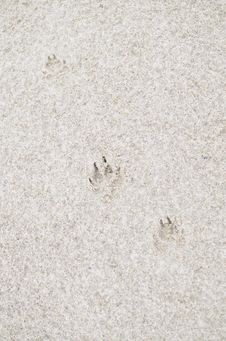 Dog Footprint On Sandy Beach Stock Images