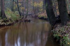 Free River In Autumn. Royalty Free Stock Photo - 31412805