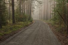 Free Forest Road. Royalty Free Stock Photos - 31412848