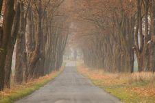 Free Road In The Autumn. Royalty Free Stock Image - 31412876
