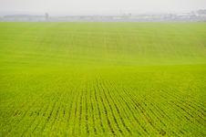 Free Green Field Stock Image - 31416381