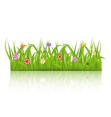 Free Green Grass With Flower Isolated On White Backgrou Royalty Free Stock Photography - 31418377