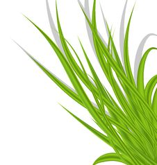 Free Summer Green Grass Isolated On White Background Stock Image - 31418391