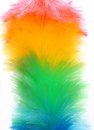 Free Soft Colorful Duster Close-up Stock Photography - 31428152