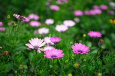 Free The Wild Flowers Royalty Free Stock Photography - 31421407