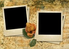 Free Vintage Background With A Polaroid-framework And A Rose Royalty Free Stock Image - 31425396