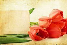 Free Red Tulips On Vintage Background Stock Photography - 31435072