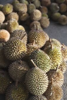 Durian Fruit, King Of Fruit Stock Photography