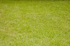 Free Green Lawn Grass Stock Images - 31437254