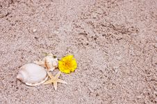 Free Flower And Seashells Stock Image - 31437281