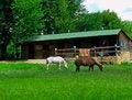 Free Horses Stock Photography - 31454282