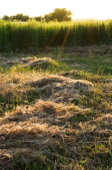 Free Dry Grass Cuttings Stock Photography - 31453812