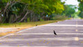Free Wild Bird Standing On The Road Royalty Free Stock Images - 31466299