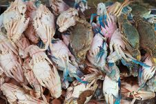 Stack Of Fresh Blue Crab &x28; Flower Crab&x29; Stock Photography