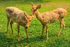 Free Deers In Open Zoo Stock Image - 31462381