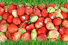 Free Frame Of Green Grass On The Background Of Wild Strawberries. Royalty Free Stock Image - 31464656