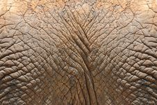 Free Elephant Skin Stock Photos - 31466173