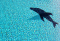 Free Silhouette Of Dolphin Royalty Free Stock Photos - 31478488
