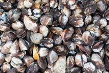 Free Group Of Sea Shell Royalty Free Stock Photography - 31472647