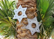 Free Six-pointed Stars On A Palm Tree Royalty Free Stock Photos - 31478518