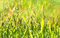 Free Fresh Grass In The Morning Dew Stock Image - 31475051