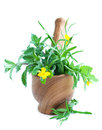 Free Mortar With Herb Royalty Free Stock Photo - 31480555