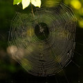 Free Spider&x27;s Web Stock Photography - 31489612