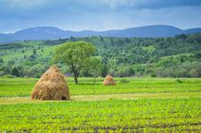 Free Hay Stacks Royalty Free Stock Photos - 31481968