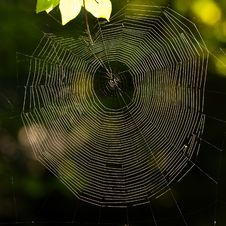 Free Spider S Web Stock Photography - 31489612
