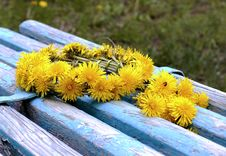 Free Wreath Of Yellow Dandelions Stock Photo - 31492890