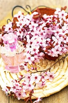 Flower Essence Royalty Free Stock Images