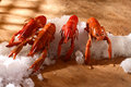 Free Crayfishes Stock Images - 3152704