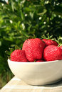 Free Big Red Strawberries Stock Images - 3154444