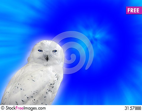 Free Snowy Owl Royalty Free Stock Photos - 3157888