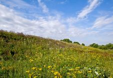 Landscape With Yellow Flowers Royalty Free Stock Images