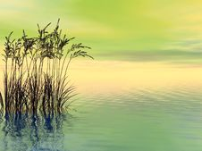 Free Water Grass Royalty Free Stock Images - 3150989