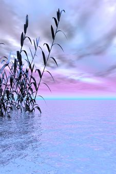 Free Water Grass Royalty Free Stock Photography - 3151107
