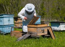 Free Beekeeper 2 Royalty Free Stock Photo - 3151335