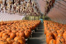Pumpkin Farm Stand Stock Photos