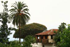 Free Oldest Tree Royalty Free Stock Photo - 3152955
