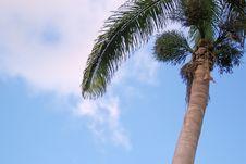 Free Palm Tree Stock Photography - 3154092