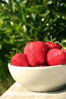 Big Red Strawberries Stock Images